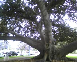 On my way to see Lee, this is a tree I walk past in Balboa Park.